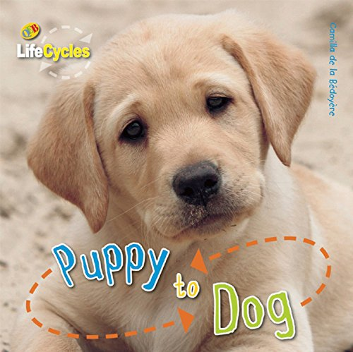 9781609920470: Puppy to Dog (LifeCycles)