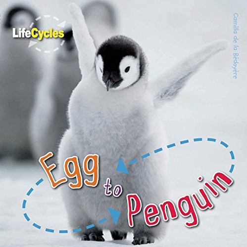 9781609920487: Egg to Penguin (LifeCycles)