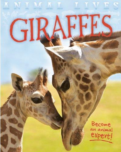 9781609926922: Giraffes (Animal Lives)