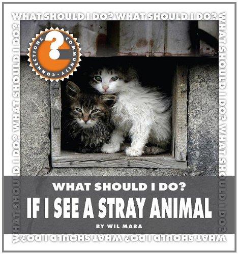 What Should I Do? If I See a Stray Animal (Hardback): Wil Mara