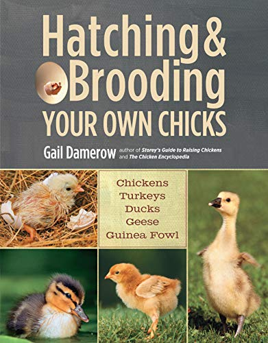9781612120140: Hatching & Brooding Your Own Chicks: Chickens, Turkeys, Ducks, Geese, Guinea Fowl