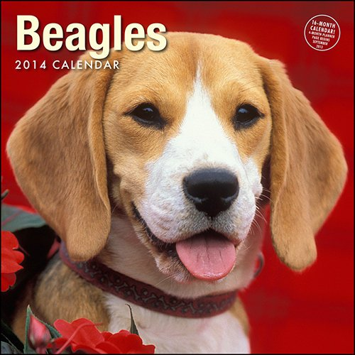 Beagles 2014 Calendar