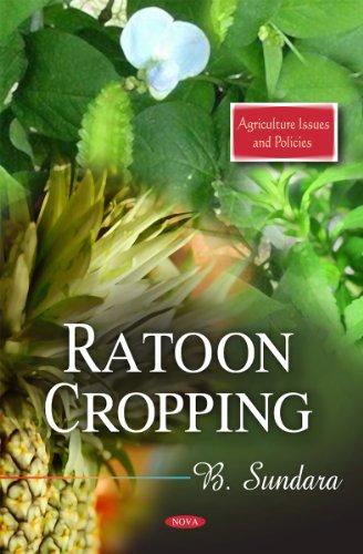 Ratoon Cropping (Hardback): B. Sundara