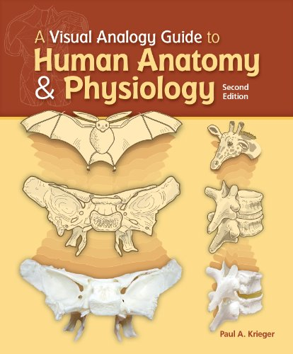 9781617310669: A Visual Analogy Guide to Human Anatomy and Physiology