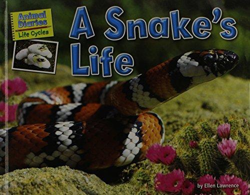 9781617724114: Animal Diaries: Life Cycles
