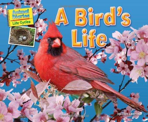 9781617725951: A Birds Life (Science Slam: Animal Diaries Life Cycles)