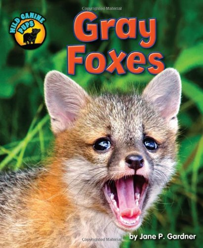 9781617729317: Gray Foxes (Wild Canine Pups)
