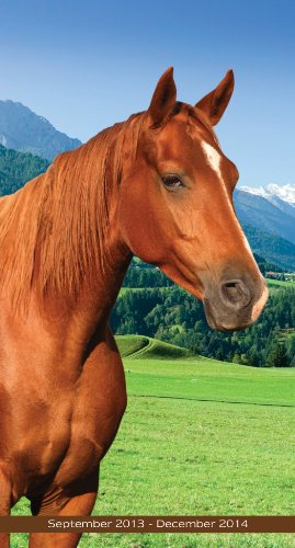 9781617768323: 2014 Horses Pocket Calendar