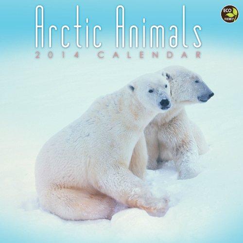 9781617769658: 2014 Arctic Animals Wall Calendar