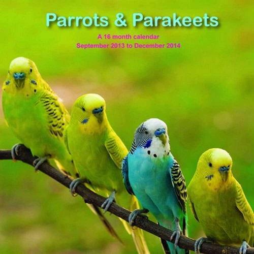 9781617913181: Parrots and Parakeets 2014 Wall Calendar