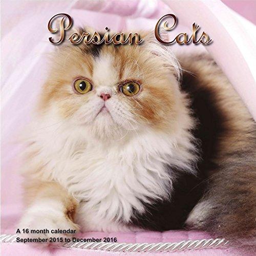 9781617915376: Persian Cat Calendar - 2016 Wall calendars - Cat Calendars - Kitten Calendar - Monthly Wall Calendar by Magnum