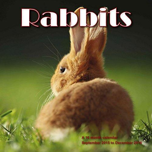 9781617915505: Rabbits Calendar - 2016 Wall calendars - Animal Calendar - Monthly Wall Calendar by Magnum