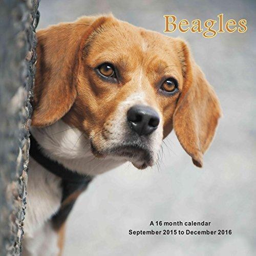 9781617915604: Beagles Calendrier Calendar 2016