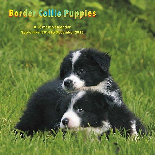 9781617915659: Border Collie Puppies Calendar - 2016 Wall calendars - Dog Calendars - Monthly Wall Calendar by Magnum