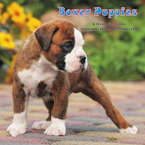 9781617915697: Boxer Puppies Calendar - 2016 Wall calendars - Dog Calendars - Monthly Wall Calendar by Magnum