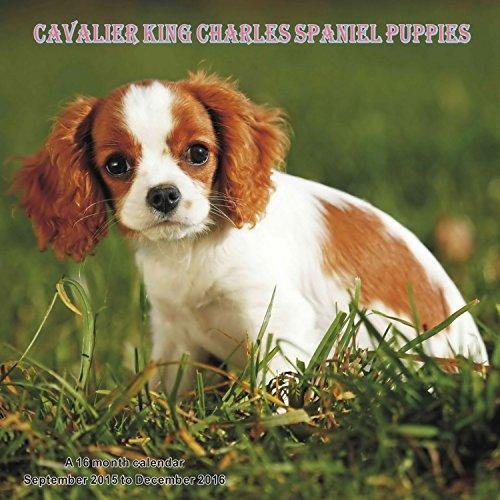 9781617915734: Cavalier King Charles Spaniel Puppies Calendario Calendar 2016