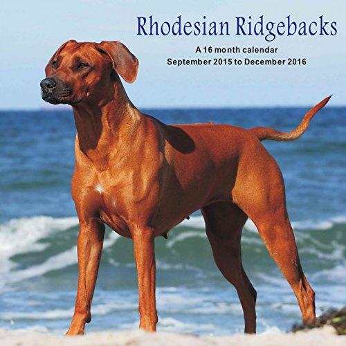 9781617916014: Rhodesian Ridgebacks Calendrier Calendar 2016