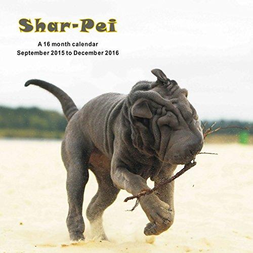 9781617916069: Shar-Pei Calendario Calendar 2016