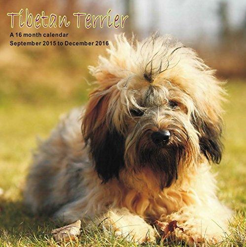 9781617916090: Tibetan Terrier Calendar - 2016 Wall calendars - Dog Calendars - Monthly Wall Calendars by Magnum