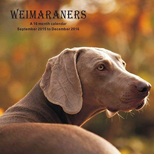 9781617916151: Weimaraners Calendar - 2016 Wall calendars - Dog Calendars - Monthly Wall Calendar by Magnum