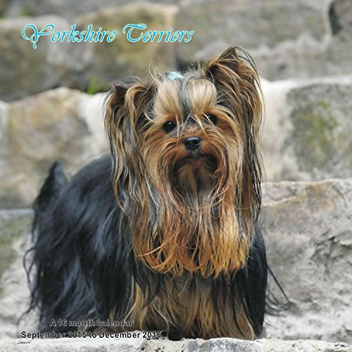 9781617916175: Yorkshire Terriers Calendar - 2016 Wall calendars - Dog Calendars - Monthly Wall Calendar by Magnum