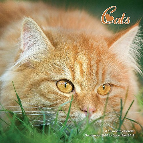 9781617916496: Cats Calendar - 2017 Wall Calendars - Calendar 2016 - Cat Calendar - Kitten Calendar - Monthly Wall Calendar by Magnum