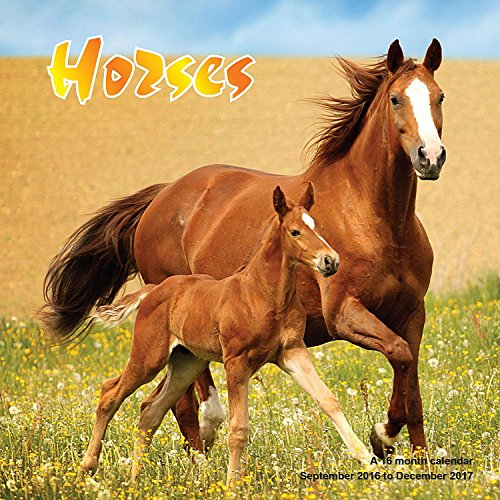 9781617916601: Horse Calendar - 2017 Wall Calendars - Calendar 2016 - Animal Calendar - Monthly Wall Calendar by Magnum