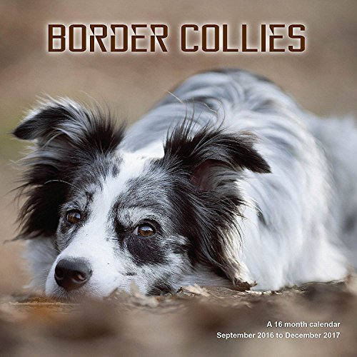 9781617916779: Border Collie Calendar - 2017 Wall Calendars - Calendar 2016 - Dog Breed Calendars - Monthly Wall Calendar by Magnum