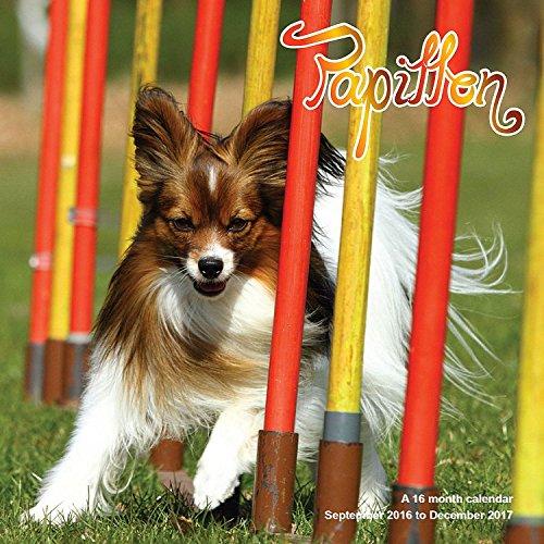 9781617917080: Papillon Calendar - 2017 Wall Calendars - Calendar 2016 - Dog Breed Calendars - Monthly Wall Calendar by Magnum