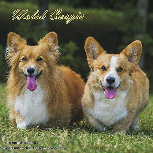 9781617917233: Corgi Calendar - 2017 Wall Calendars - Calendar 2016 - Dog Breed Calendars - Monthly Wall Calendar - Welsh Corgis Calendar by Magnum