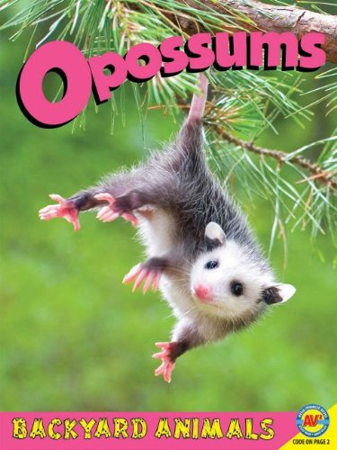 9781619132641: Opossums with Code (Backyard Animals)