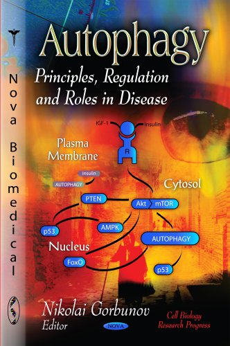 9781619422667: Autophagy: Principles, Regulation and Roles in Disease (Cell Biology Research Progress)