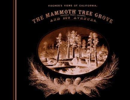 Vischer's Views of California: The Mammoth Tree: Edward Vischer