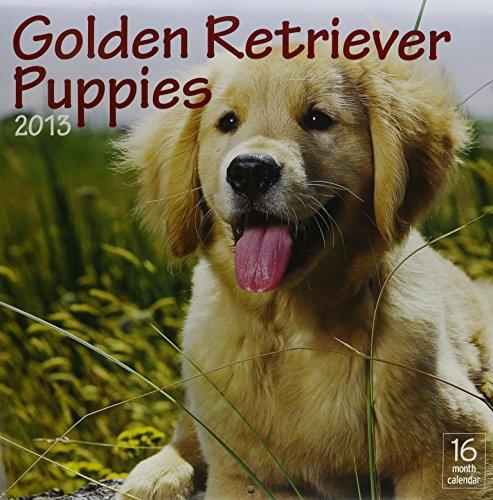 9781619980983: 2013 Golden Retriever Puppies