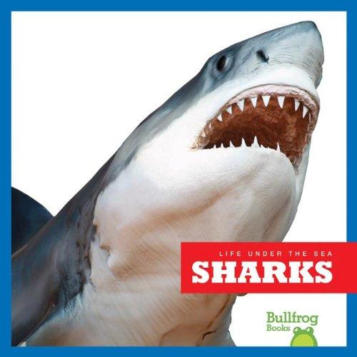 9781620310359: Sharks (Bullfrog Books: Life Under the Sea)