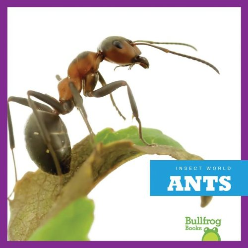 9781620310502: Ants (Bullfrog Books: Insect World)