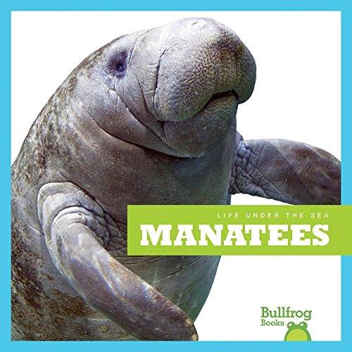 9781620311899: Manatees (Bullfrog Books: Life Under the Sea)