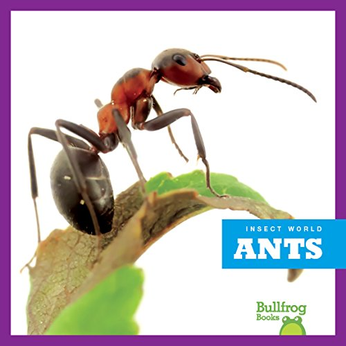 9781620314661: Ants (Bullfrog Books: Insect World)