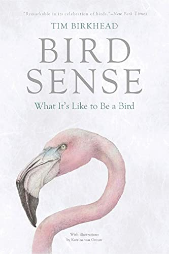 9781620401897: Bird Sense: What It's Like to Be a Bird