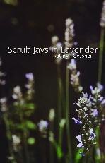 9781622297450: Scrub Jays in Lavender