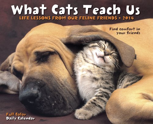 9781623430214: What Cats Teach Us: Life Lessons from Our Feline Friends