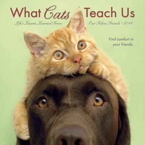 9781623431198: What Cats Teach Us 2014 Mini Calendar