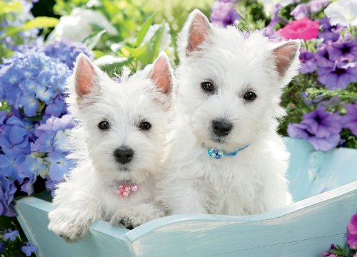 9781623431754: Just Westies Jigsaw Puzzle