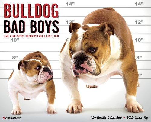 9781623432218: Bulldog Bad Boys 2015 Wall Calendar