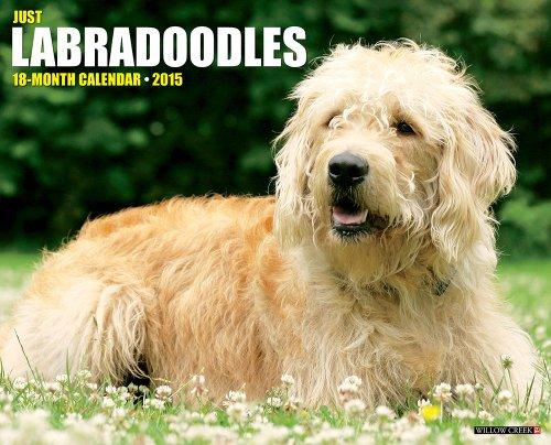 Just Labradoodles 2015 Wall Calendar: Willow Creek Press