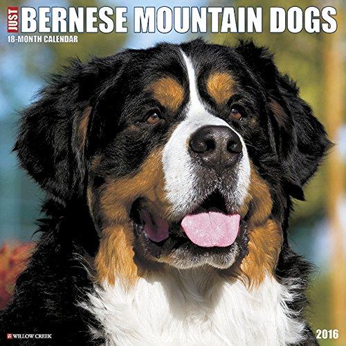 9781623436247: Just Bernese Mountain Dog 2016 Calendar
