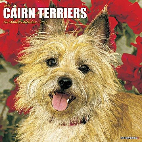 9781623436476: 2016 Just Cairn Terriers Wall Calendar