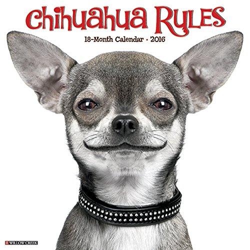 9781623436582: Chihuahua Rules 2016 Calendar