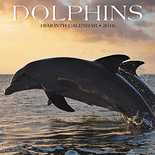 2016 Dolphins Wall Calendar: Willow Creek Press