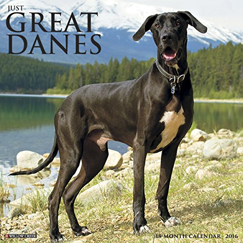 9781623437091: 2016 Just Great Danes Wall Calendar